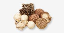 버섯류 보조이미지